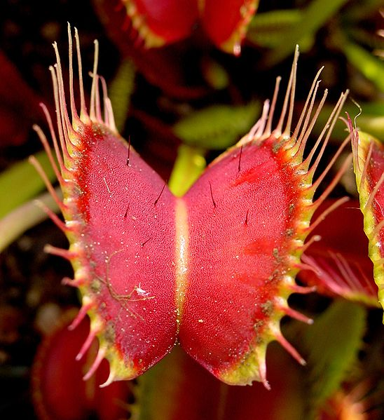 10 Dazzling Poisonous Carnivorous Plants Life on Earth