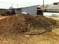 Cow Manure: