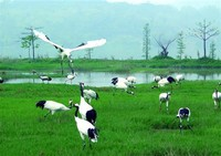 Red-Crowned Crane Ecological Park