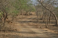 Gir Forest ​National Park​