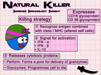 Natural Killer (NK Cells)
