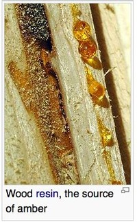 Wood Resin, the Source of Amber
