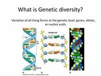 gene pool diversity - 638×479