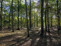 Pamber Forest and Silchester Common