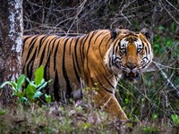 Nagarhole ​National Park​
