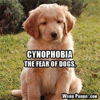 Cynophobia – The Fear of Dogs