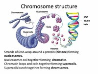 DNA Wraps Around Histone Proteins Forming Nucleosomes