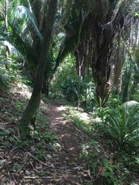 Wander the Trails in the Botanical Garden