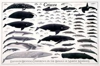 Cetology, the Study of Cetaceans