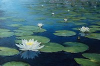 Water Lilies​