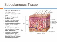 The Deeper Subcutaneous Tissue