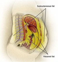 Visceral Abdominal Fat