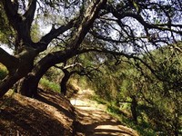 Oak Grove Loop Trail