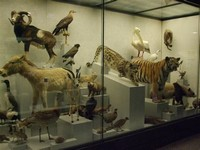 UZH - ​Zoological Museum​