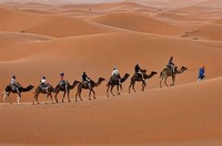 Camel Trek From Marrakech & Desert Tours Morocco