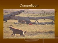 Predation Competition