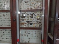 Entomology Meuseum