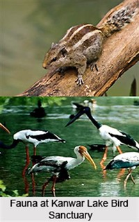 Kanwar Lake ​Bird Sanctuary​