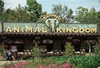 Disney's ​Animal Kingdom​