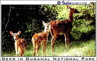 Gugamal ​National Park​