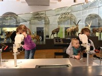 UZH - Zoological Museum
