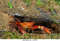 Crab Mountain
