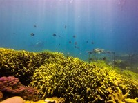 Get a Close up Look at the Underwater World With Some Scuba Diving in Ao Nang!
