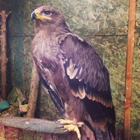 North Somerset Bird Of Prey Centre