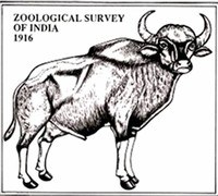 Zoological Survey of India,