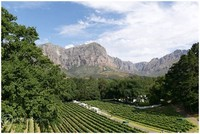 Molenvliet Wine & Guest Estate, Stellenbosch, South Africa