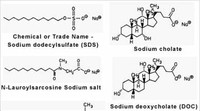 Detergents in Biochemistry and Biotechnology