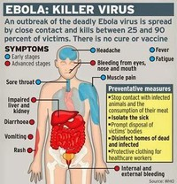 Ebola Virus and Marburg Virus Infections
