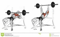 Incline Dumbbell Press Muscle Targeted: Chest