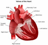 Diseases of the Heart Valves