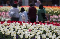 Ibaraido Sunlight Through Forest