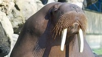 Six Flags Walrus Experience