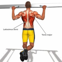 5 – The Chin-Up