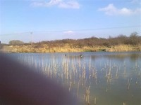 Maidendale Nature & Fishing Reserve