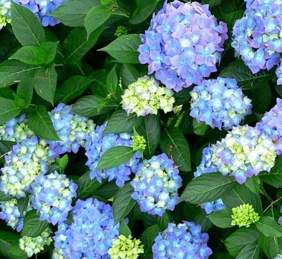 What determines color in flowering plants? - Quora