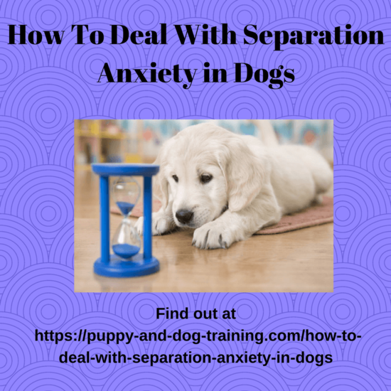 How To Deal With Separation Anxiety in Dogs – Puppy and ...