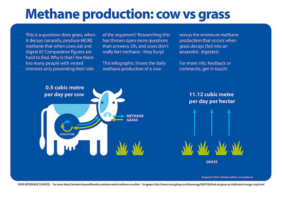Methane production of cows vs grass | This is a question ...