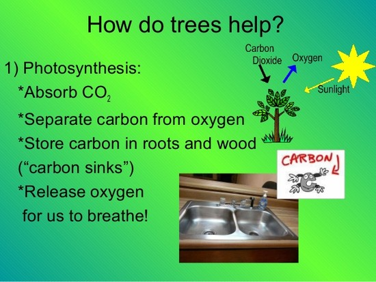 Role of Trees in Cleaning the Air