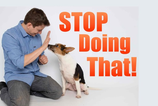 How to Correct your Dog's BAD Behavior! - YouTube