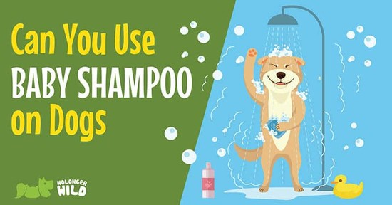 Run Out Of Dog's Shampoo? – Can You Use Baby Shampoo On Dogs?