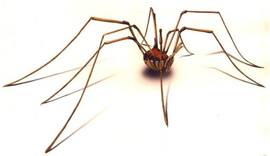 Why do so many people hate spiders? Arachnophobics, don't ...