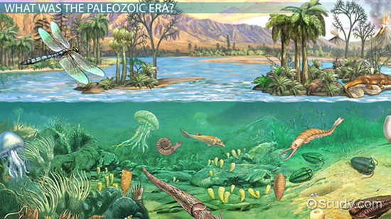 The Paleozoic Era: Definition, Timeline & Events - Video ...