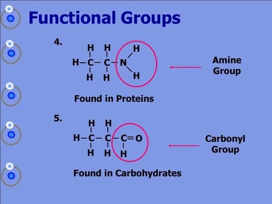 Chemicals of Life Carbohydrates Proteins Lipids Nucleic ...