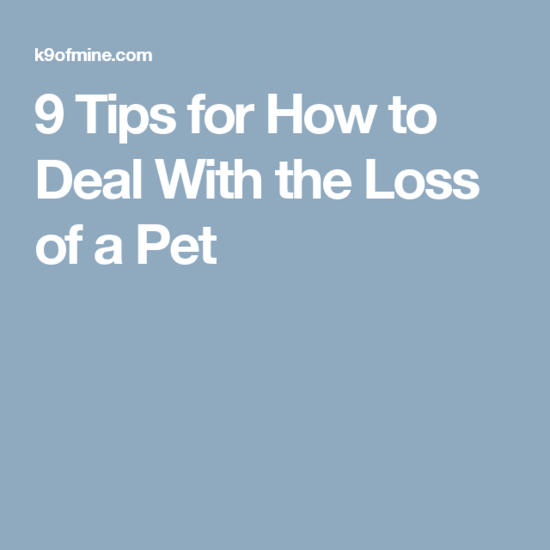 9 Tips for How to Deal With the Loss of a Pet | Pet loss ...