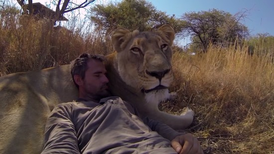 Man Tries to Hug a Wild Lion, You Won't Believe What ...