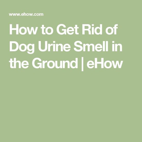 How to Get Rid of Dog Urine Smell in the Ground | Dogs ...
